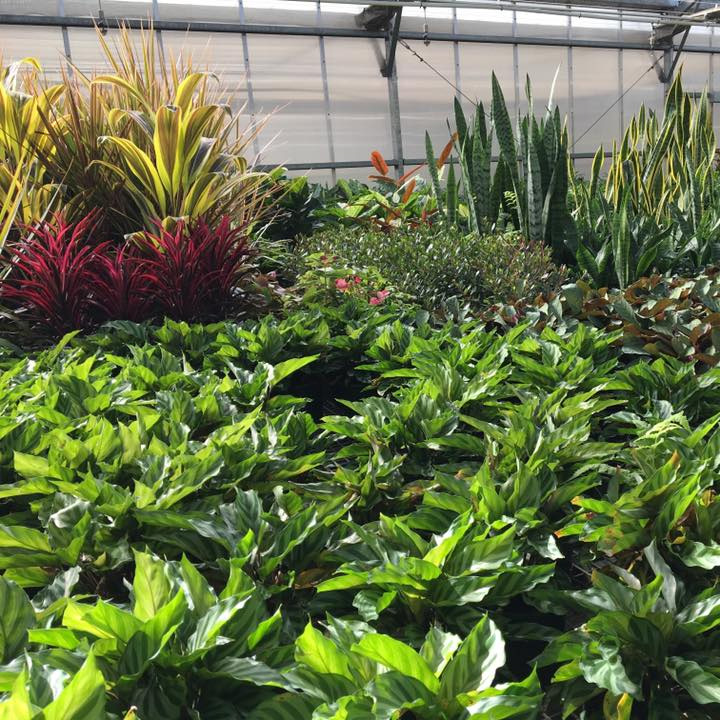 Thriving plants inside Melbourne Polytechnic's Yarra Edge Nursery